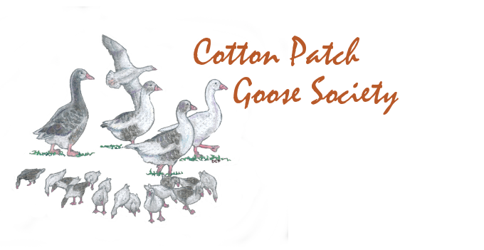 The Cotton Patch Goose Society - Dedicated to Preserving America's Landrace Goose